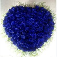 圣诞节送女朋友99朵蓝色妖姬花束